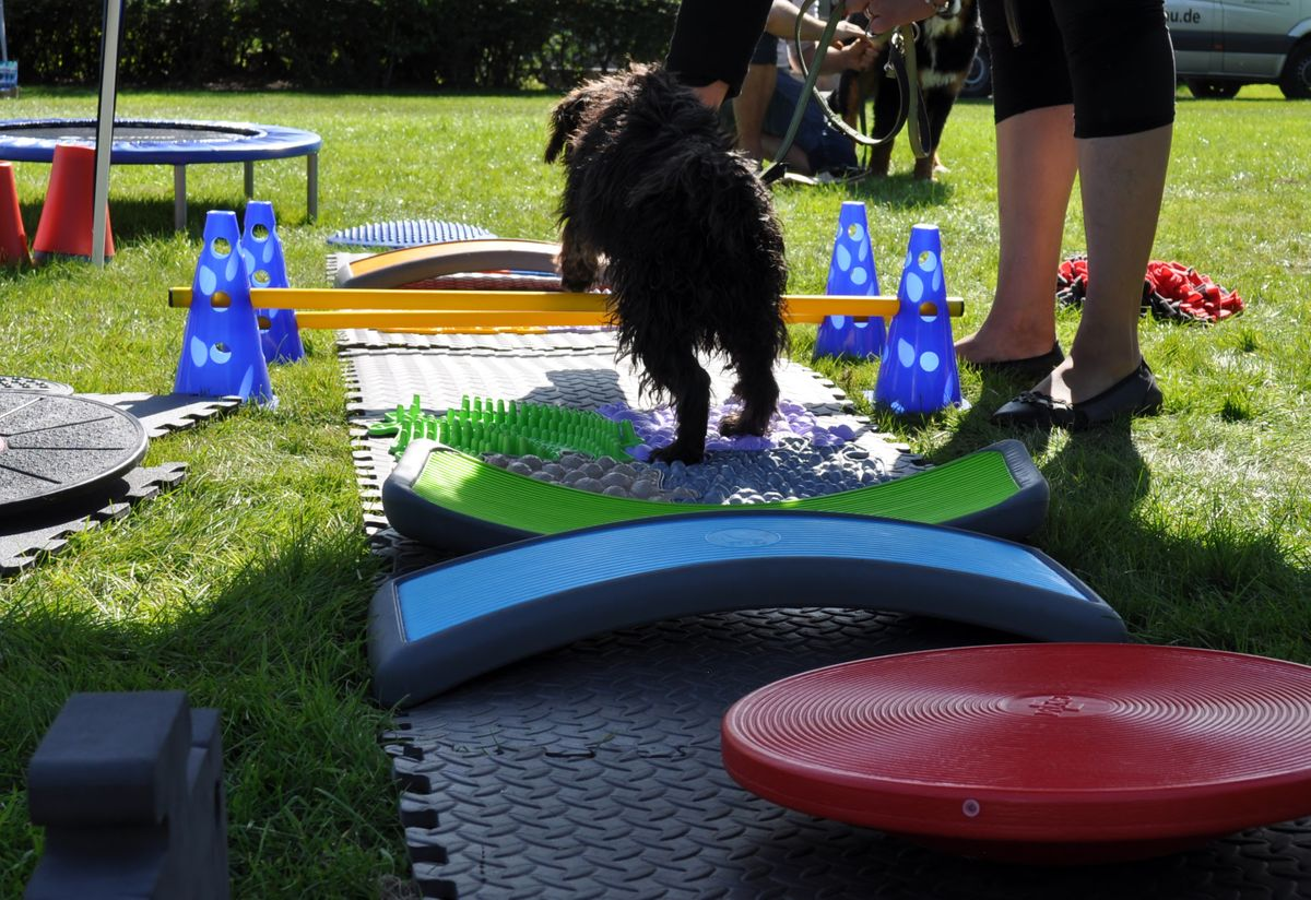 Aqua Dog Festival in Ahaus 20. Sept. 2020